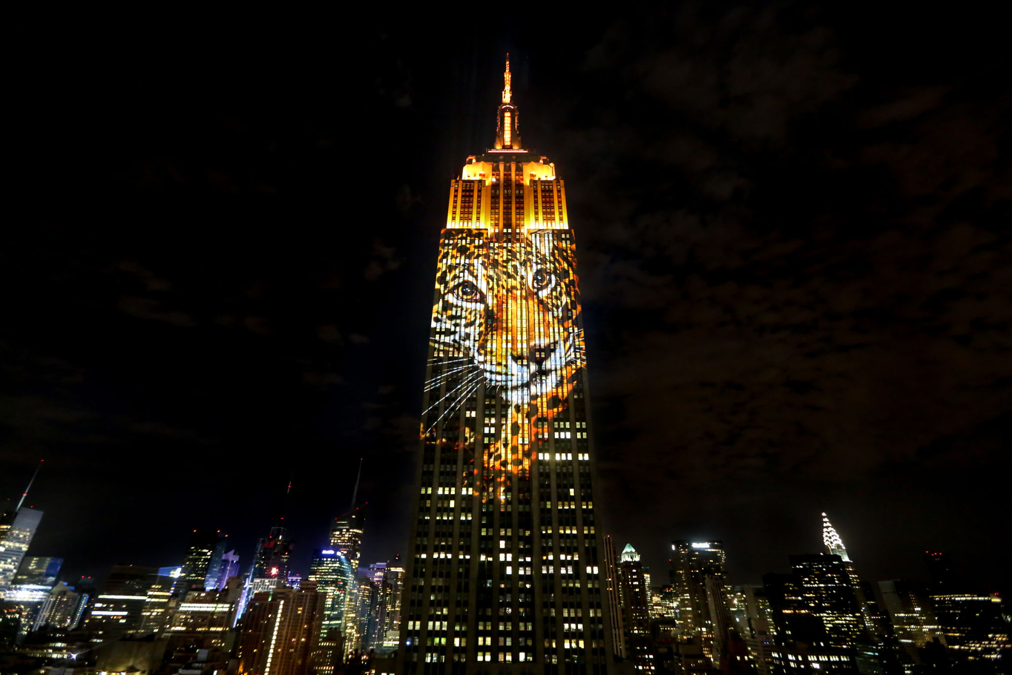 Empire State Building Lit Up With Endangered Animals